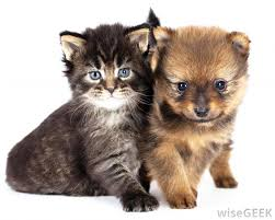 dogs and cats having babies. Interesting Cats If I Have A Dog Can Get Cat With Pictures To Dogs And Cats Having Babies H