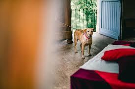 best dog friendly travel destinations