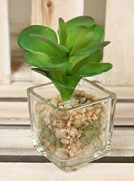 office pot plants. mini cactus plants in glass cube artificial succulent home u0026 office pot
