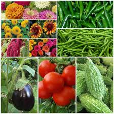 Kitchen Garden In India Best Gardening Store Buy Rose Organic Seeds Online From India