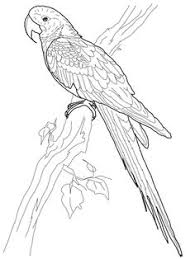hyacinth macaw coloring page from macaw select from 29179 printable crafts of cartoons nature any more