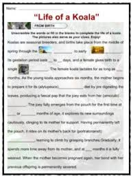 koala facts worksheets information for kids life of a koala