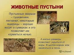 Презентация на тему Зона пустынь В России полупустыни и пустыни  5 ЖИВОТНЫЕ