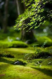 Small Picture 61 best Moss Lichen images on Pinterest Moss garden Nature