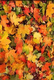 """Résultat de recherche d'images pour """"feuilles d'automne"""""""