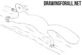 Small Picture How to Draw a Squirrel Step by Step DrawingForAllnet