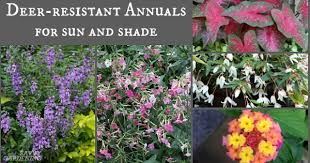 <b>Deer</b>-Resistant Annuals: Colorful Choices for Sun and Shade