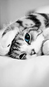 Cute Kittens Mobile Wallpapers ...