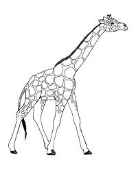 Coloring Pages Giraffe Bballcordobacom