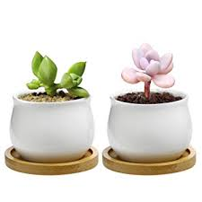 Charming Mini Ceramic Pots For Plants With Bamboo Tray, Small White Round Jars For  Flowers Or