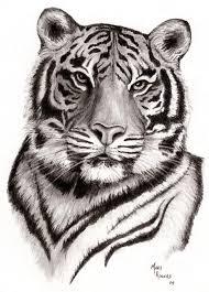 tiger face drawing pencil. Modren Face Tiger  Print Of Original Pencil Drawing Intended Face E