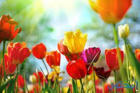 موضوع تعبير عن الربيع - موقع محتوى