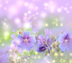 Free Spring 31 Best Free Beautiful Desktop Wallpapers Images Flowers Spring