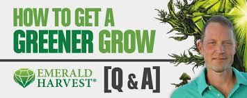 Get A Greener Grow Emerald Harvest Q A Expert Advice