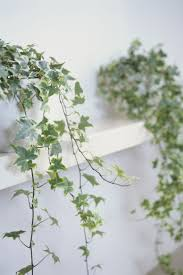 cheap office plants. Cheap Office Plants