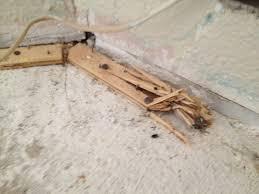 carpet nail strips. remove carpet tack strip from concrete office tackstrip the nail strips t