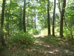 hiking trails of holbrook