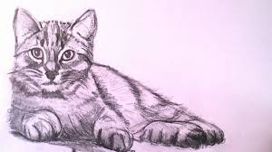 realistic cat drawing in pencil.  Pencil Realisticcatdrawinghowtodrawarealisticcatwithpencilstepstep Drawingthejpg With Realistic Cat Drawing In Pencil