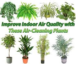 best low light houseplants to purify air 28 purifying