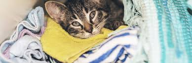 remove unwanted pet hair from laundry