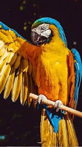 Macaw Parrot Bird 4K Ultra HD Mobile ...