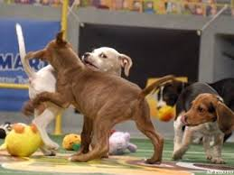 puppy bowl hedgehog cheerleaders. Perfect Bowl Puppy Bowl Adds Hedgehog Cheerleaders Dogs Puppybowl For 2