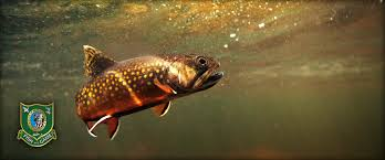 Florida Freshwater Fishing Regulations Chart New Hampshire Freshwater Fishing Guide 2020 Eregulations