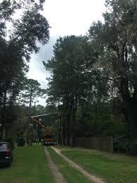 Mr Tree Tree Removal Treehouse Masters Netflix desibollywoodclub