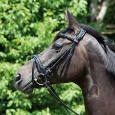 Kieffer Bridle Size Chart 19 Best Bridles Images Horses Dressage Horse Riding Gear