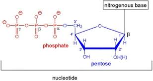 Nucleic Acids An Overview Sciencedirect Topics