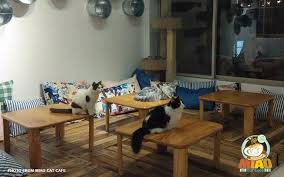 miao cat cafe9 png