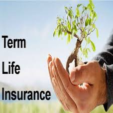 Free Term Life Insurance Quotes Instant Classy 48 Free Term Life Insurance Quotes Instant Images QuotesBae