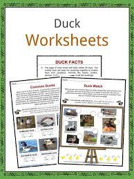 Duck Facts Worksheets Habitat Species For Kids