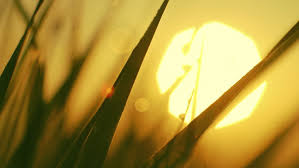 Tall Blades of Grass Free Stock Video Footage Download Clips