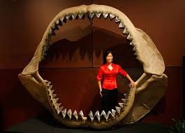 megalodon shark compared to t rex. Unique Shark Enya Kim Standing In The Jaws Of A Prehistoric Shark Carcharodon Megalodon To Megalodon Shark Compared T Rex R