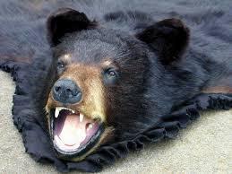 black bear rug