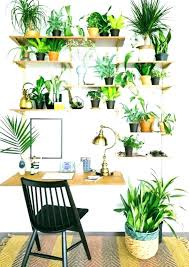 plant wall decor best indoor ideas on gorgeous ways to decorate with plants way