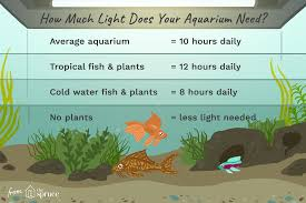 Low Light Cold Water Aquarium Plants Adjust Aquarium Lighting To Support Plants And Fish