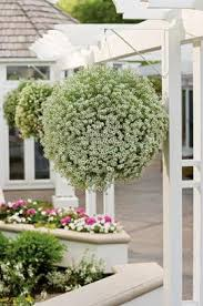 iu0027ve been thinking a lot about hanging baskets lately hanging are motheru0027s day gift staple and for good reason theyu0027re beautiful they last indoor plants direct sunlight n20