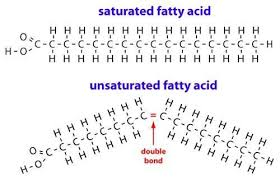 Image result for what is saturated fat