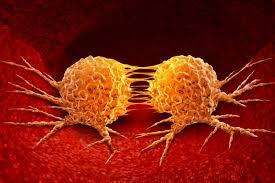 Image result for cancer stop