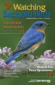 The Aussie Backyard Bird Count Starts Today  Australian GeographicBackyard Bird Watch