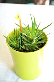 plants for windowless office. plants for windowless offices best office good offices: full