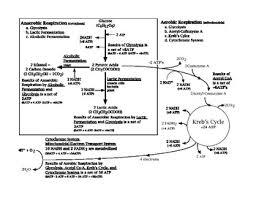 Cellular Respiration Flow Chart