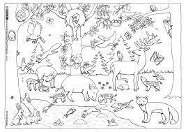 Wild als nahrungsmittel für den menschen. Wald Tiere Malvorlagen Tiere Herbsttiere Tiere Des Waldes