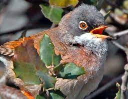 Birding in Ronda Mountains and Grazalema - Wild Andalucia