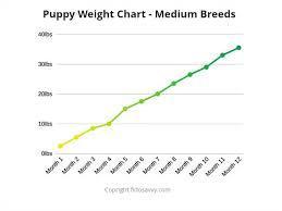 Alaskan Malamute Weight Chart German Shepherd Weight Chart Australia Www