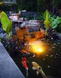 creating a koi pond in the garden