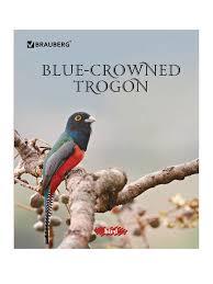 <b>Тетрадь Brauberg Эко Красивые</b> Птицы A5 48 листов 402776 ...