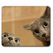 cats kitten pet playful cat office gift